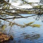 Water Through Woods